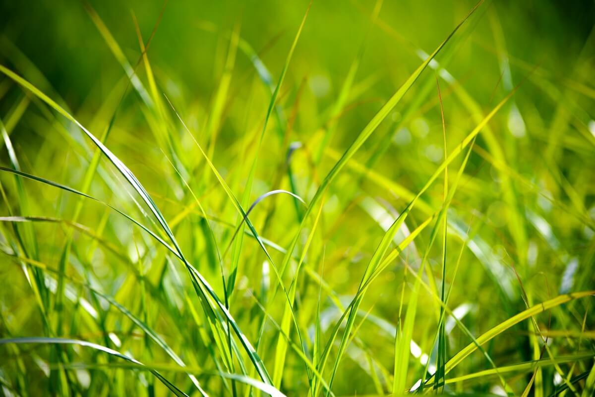 Mezőgazdasági terület Ságvár